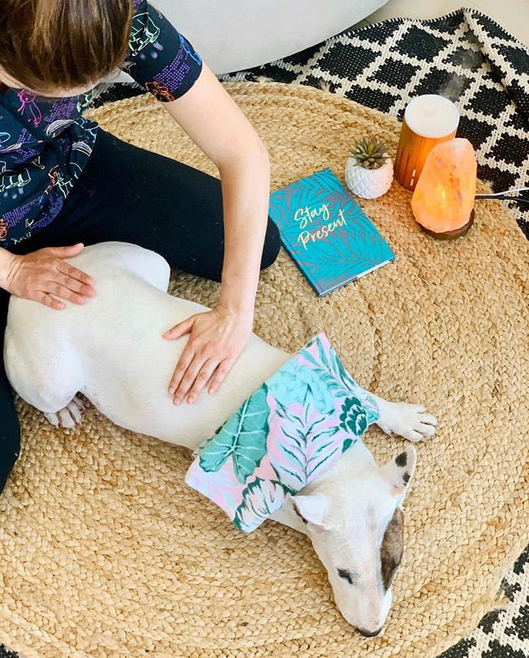 A chat with Gaby from Petzen dog massage