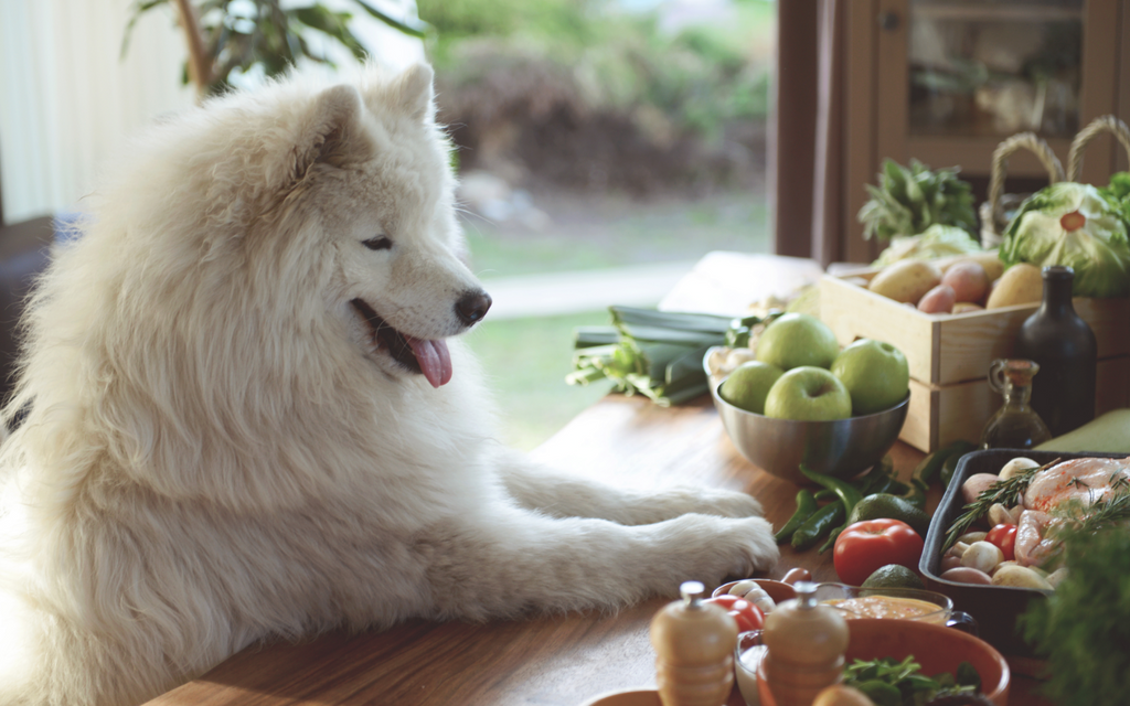 Cooking for your dog: is it safe?