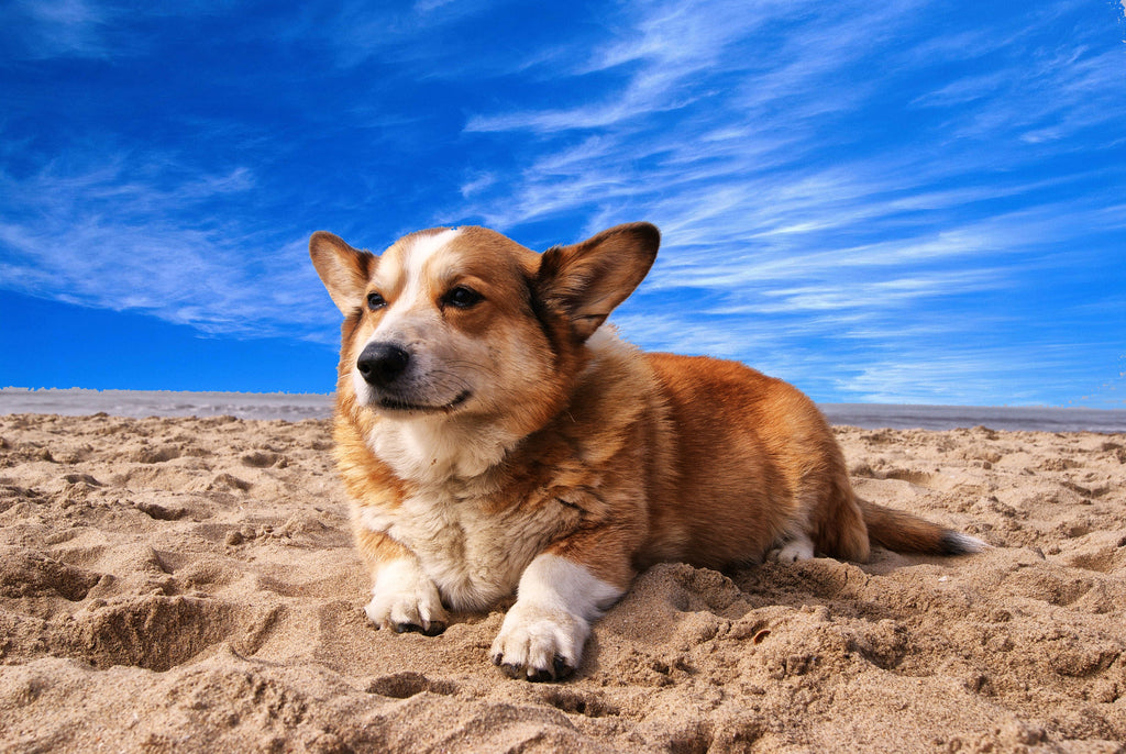 Slip, slop, slap: Sun protection for your dog