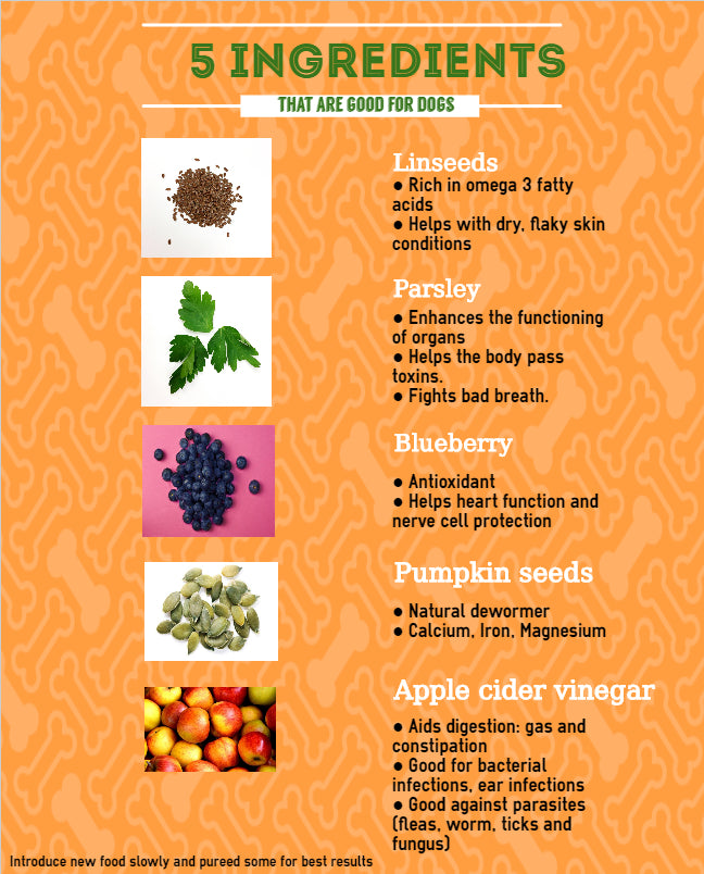 Infographic- 5 ingredients good for your dog- Doggy Grub Blog