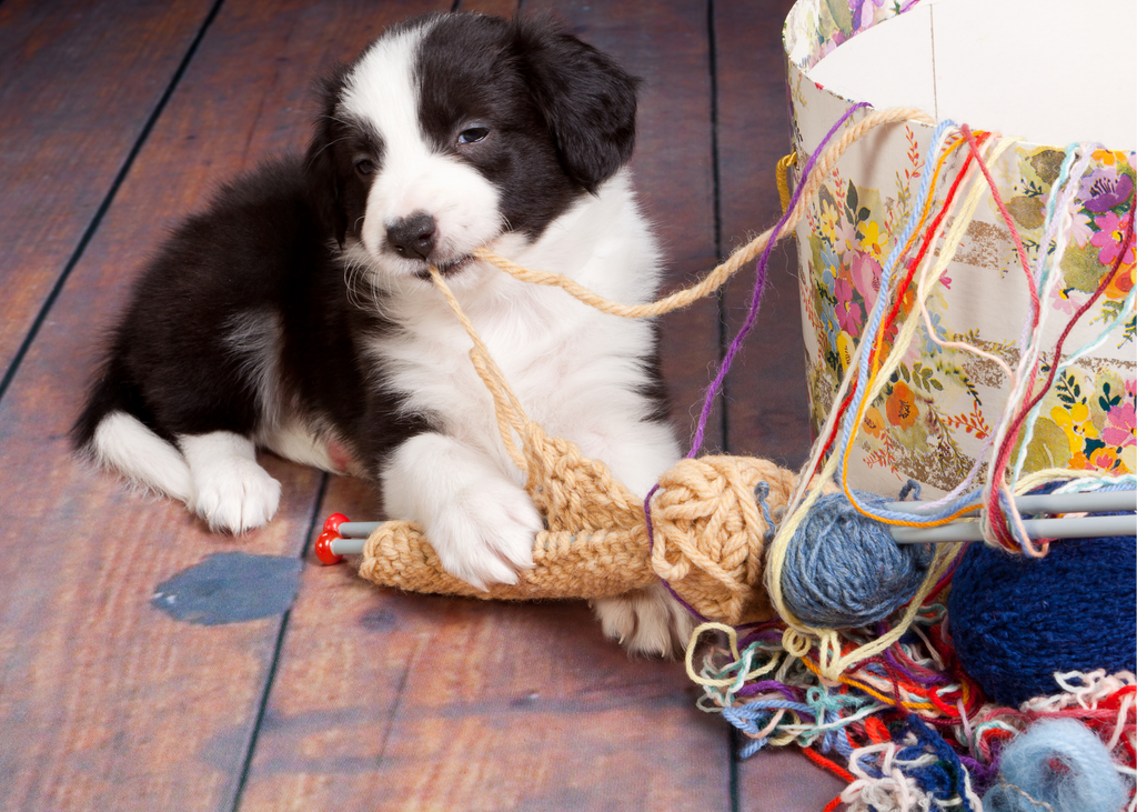 A white and black puppy is chewing on yarn coming out of a box