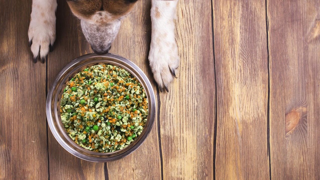 A dog is laying down towards a bowl full of yummy fresh dog food. You can only see his paws and nose, like he's about to dig into his meal.