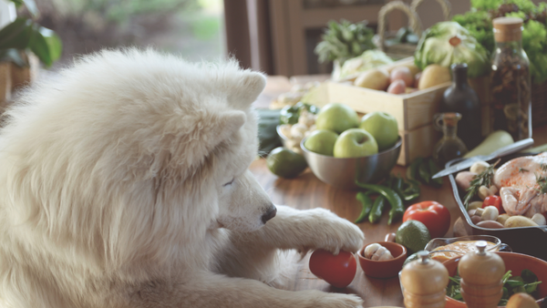 A white samoyed dog has its front paws on a table with a lot of colourfull fruits and vegetables