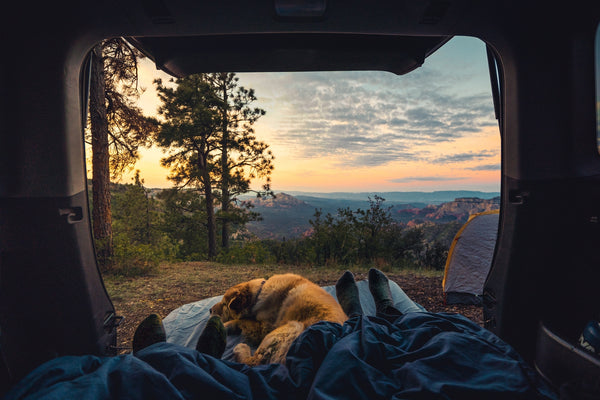 A dog in a tent camping- Travelling with your dog Doggy grub Blog