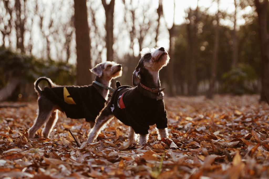 two dogs with coats on- Walking your dog in the winter Doggy Grub Blog