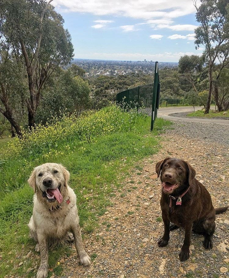Top 5 dog walking spots in Adelaide- Doggy Grub Blog