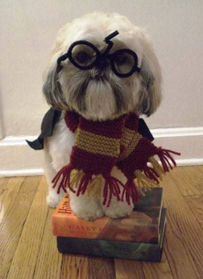 Harry Potter halloween costume for dogs- Doggy Grub blog