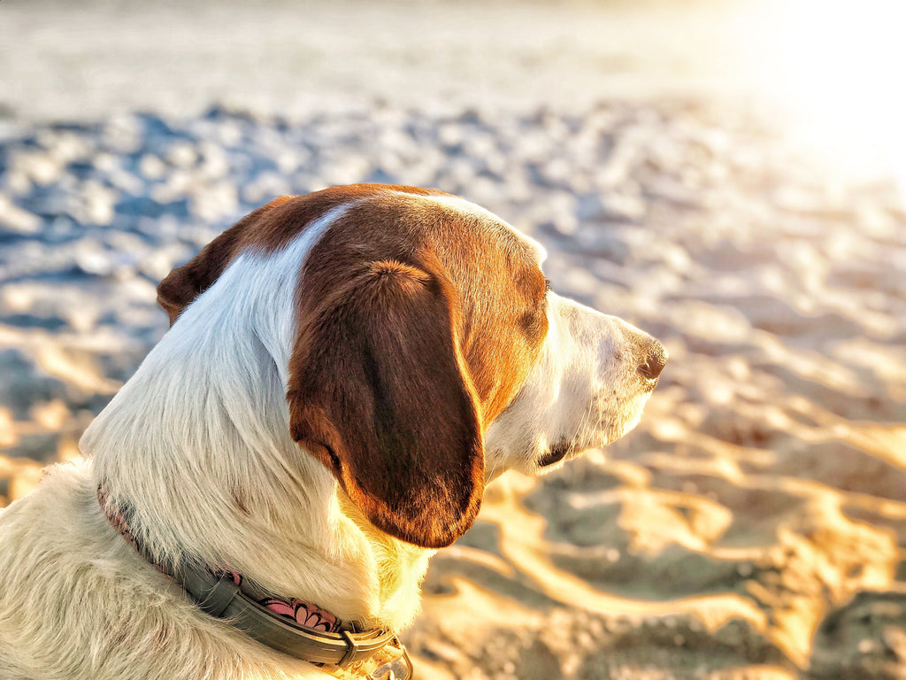Dog on the beach basking at the sun
