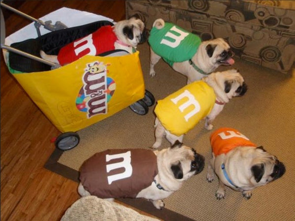 M&Ms dog costumes- Doggy Grub Blog