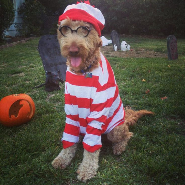 Waldog costume Halloween- Doggy Grub Blog