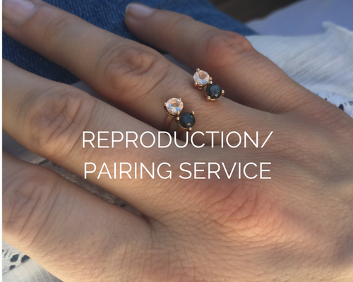 REPRODUCTION/ PAIRING SERVICE