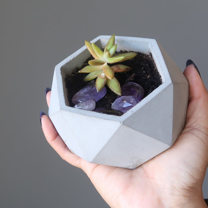 hand holding up a potted plant with amethyst stones in the soil