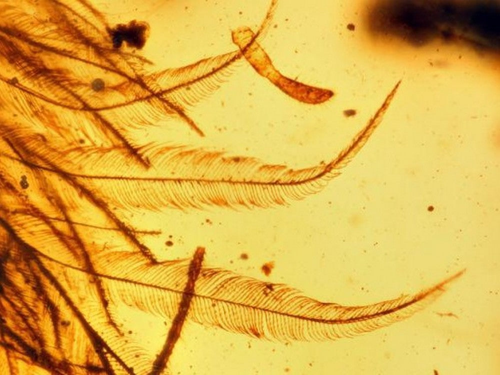 Dinosaur Feathers in Amber - Satin Crystals Blog