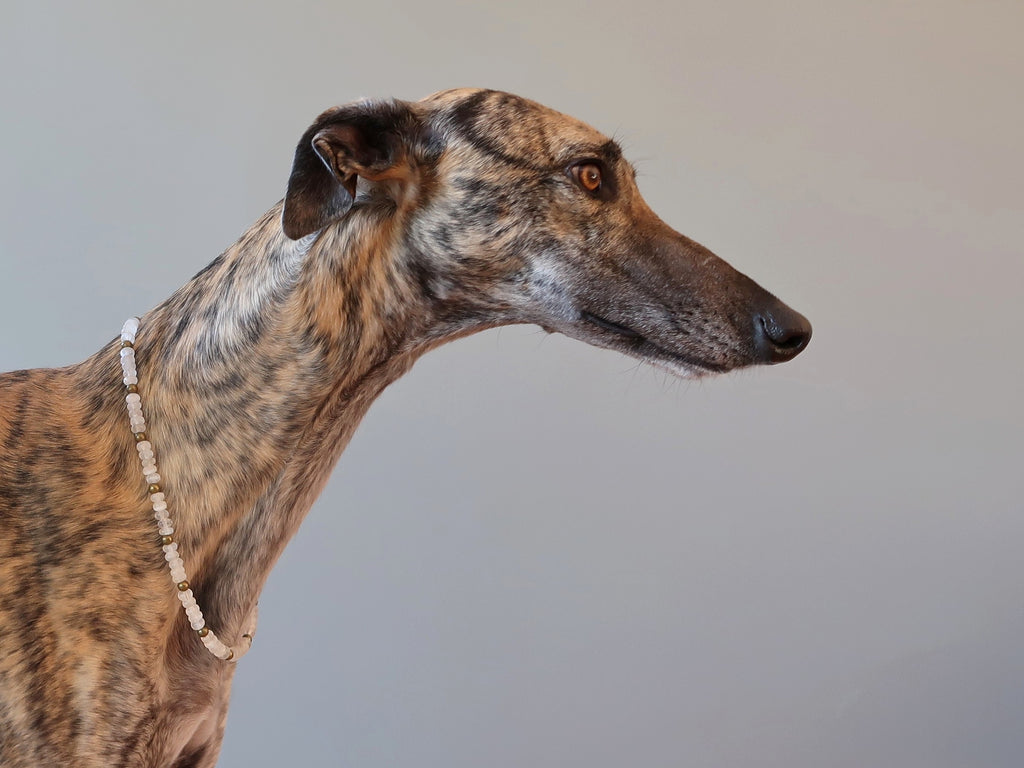 greyhound dog wearing a white selenite necklace