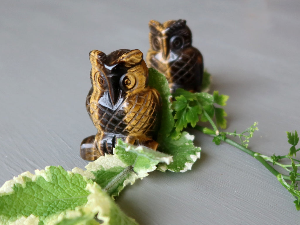 tigers eye owl pair and mint and parsley