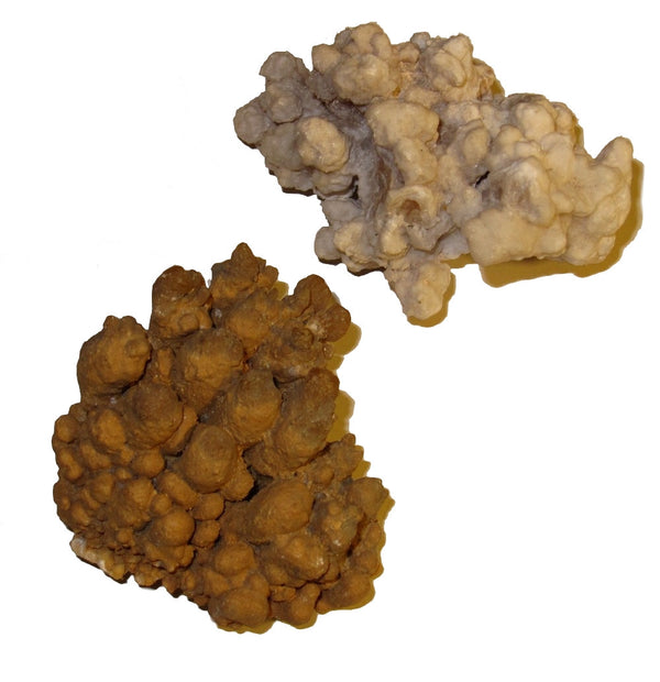 "Aragonite Cluster 2.7"" Collectible Pair of White & Oxidized Yellow Coral-like Healing Calcite Rocks C03"