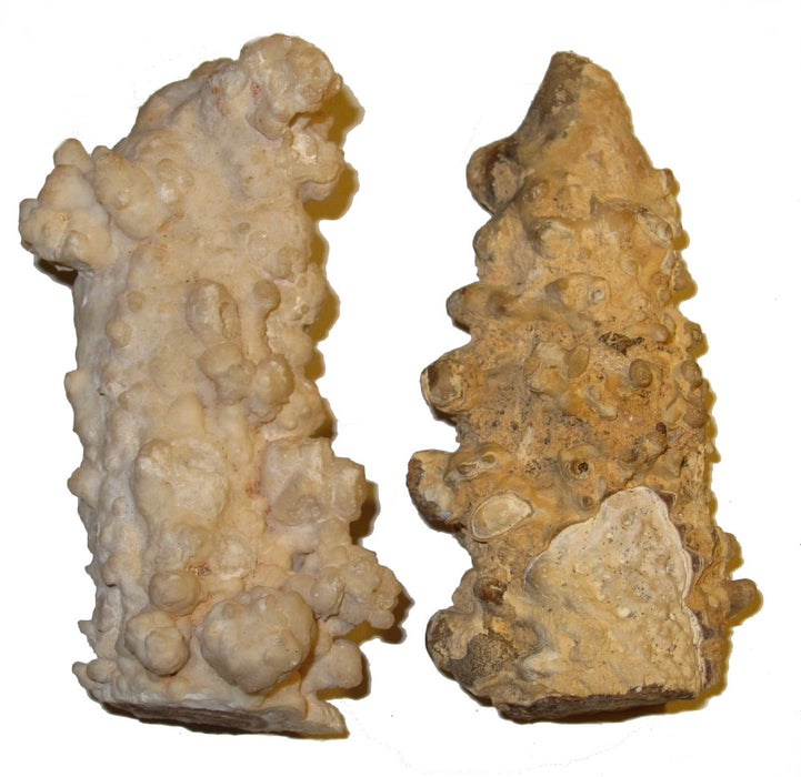 "Aragonite Cluster 3.5"" Collectible Pair of Amazing Lumpy Log Winter Crystals Earth Energy Healer Stones Hungary C04"