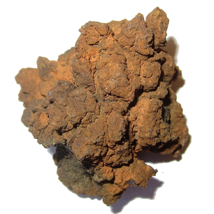 Coprolite Fossil Real Crystallized Dinosaur Poop Ancient Animal Feces