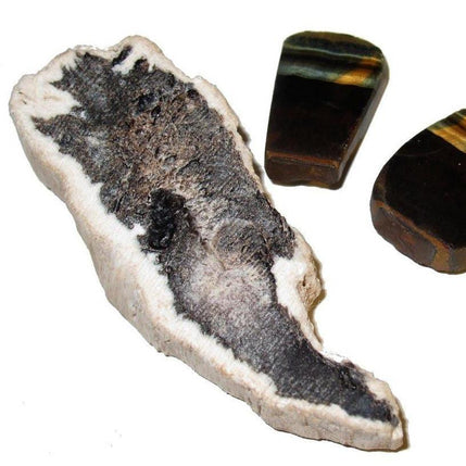 "Crystal Healing Set 2.5"" Collectible Petrified Wood Cluster & Tigers Hawks Eye Stones Earth Energy C06"