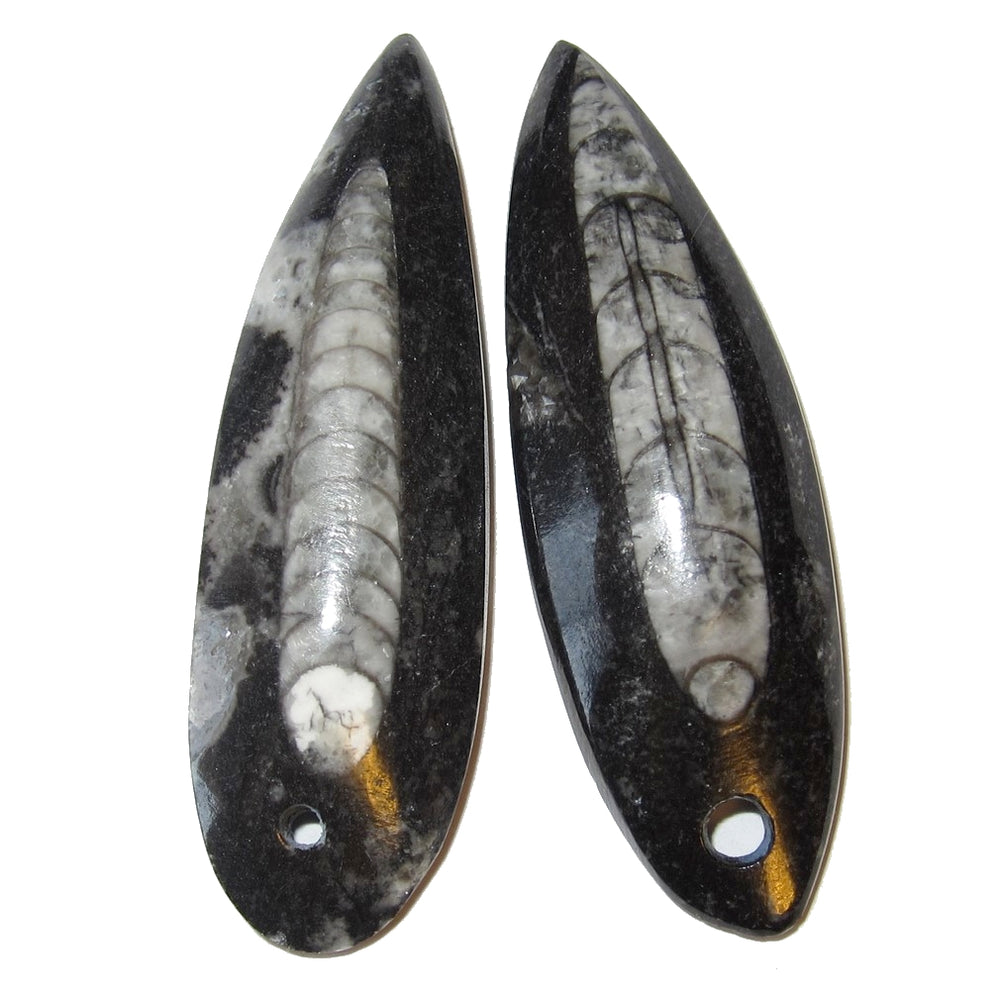 Pair of two Orthoceras Sea Fossil amulet pendants with a hole on one side. They are long drop shapes and fully polishe.d The stones are black with the white Cephalopod sea fossil in the center. Both are 2 inches long.