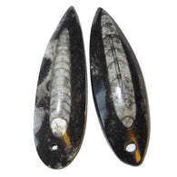 Fossil Amulet 02 Pair of Black White Orthoceras Mini Wand Stone Crystals Bead Pendant Energy Stone 2