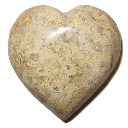Fossil Heart 01 Brown Crystal Healing Stone Eternal Soul Mates Carving Love Rock Gem 3""