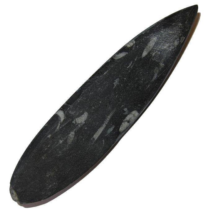 "Fossil Wand 5.5"" Collectible Arrowhead White Marine Orthoceras Crystal in Black Matrix Earth Energy Healing Point C50"
