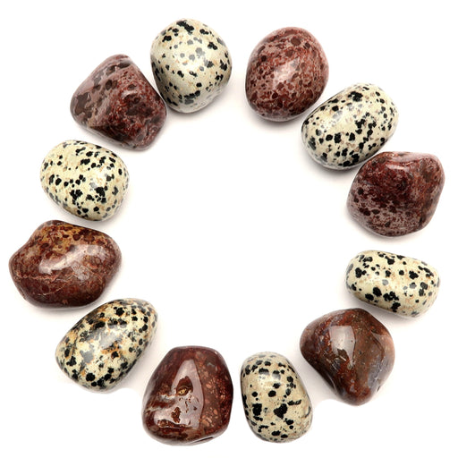 set of 6 spotted black and white dalmatian jasper and red leopard jasper tumbled stones