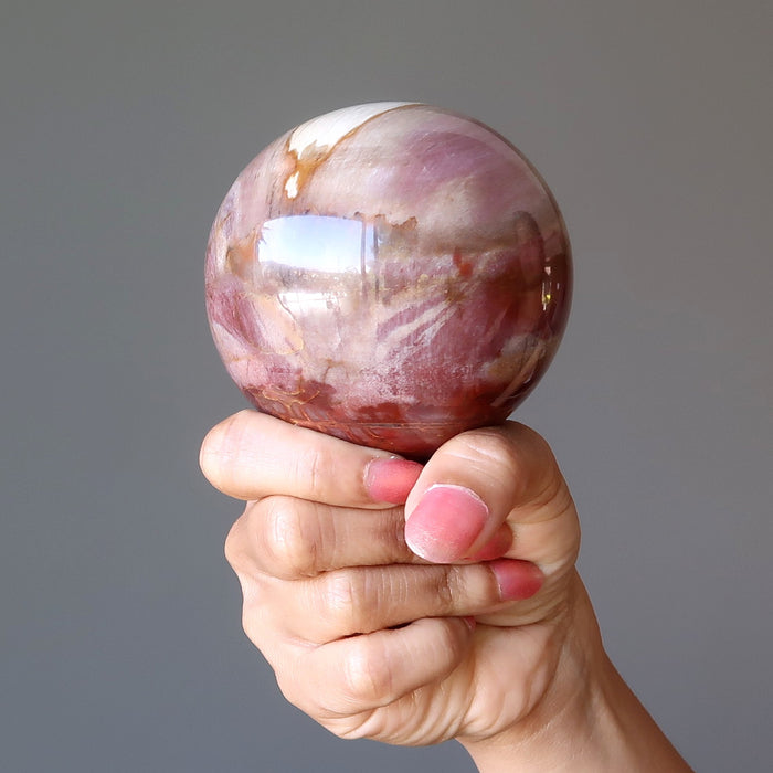 hand holding petrified wood sphere