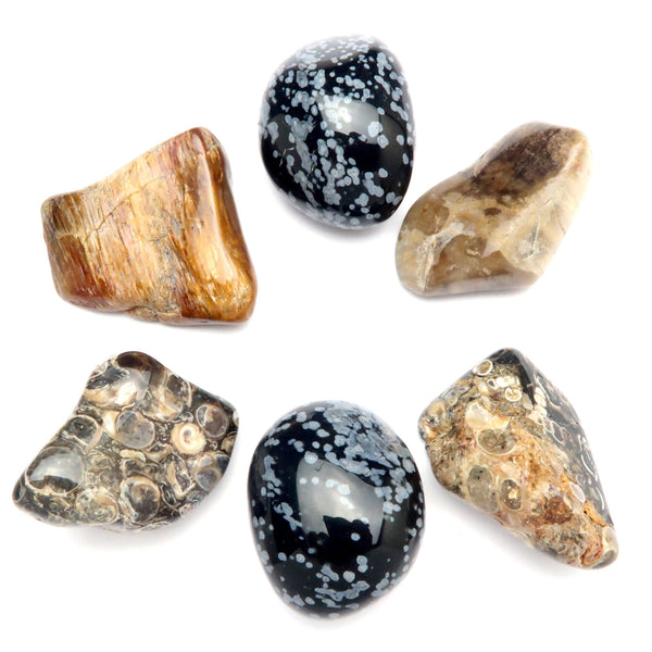 Root Chakra 14z Snowflake Obsidian Petrified Wood Turitella Agate Tumbled Stones (Set of 6)