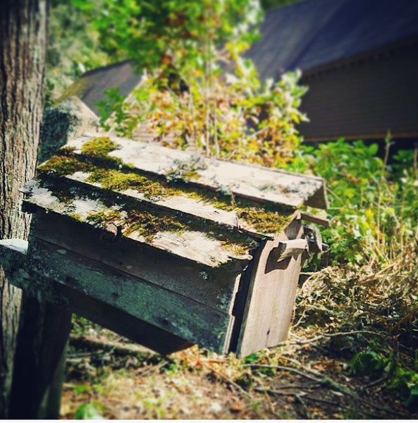 old wooden mailbox and the woods