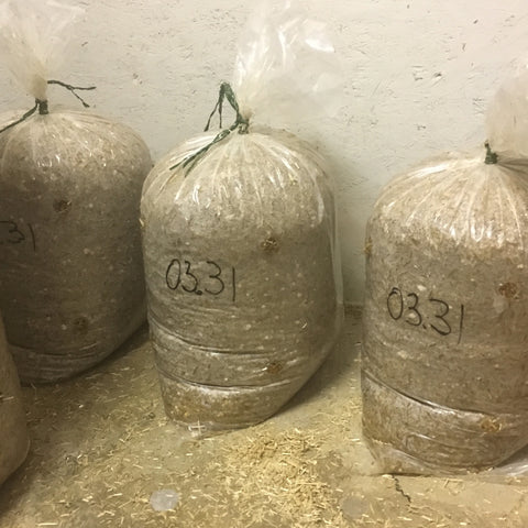 incubating home grow bags