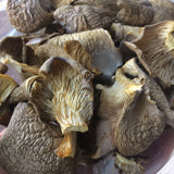 dehydrated oyster mushrooms, by Rocky Bottom Mushrooms, Taylors, SC