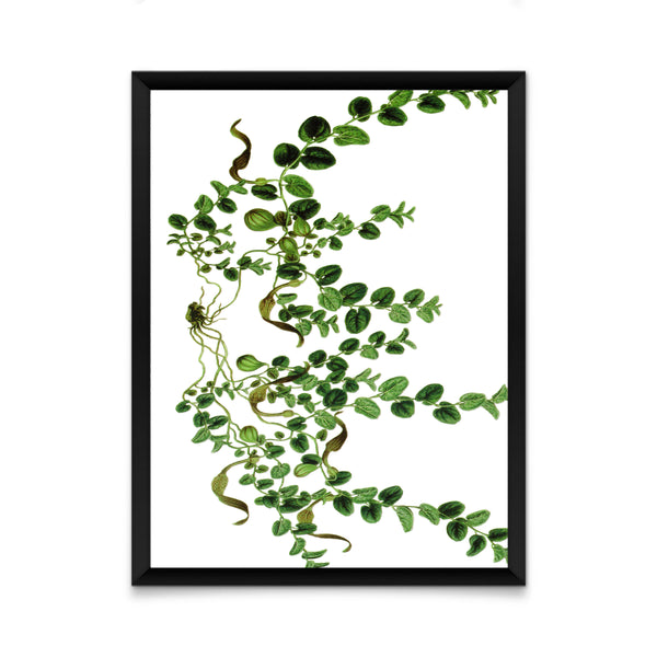 Air plant print/ wall art