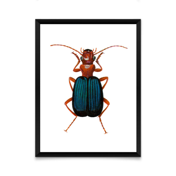 Blue beetle print/ wall art