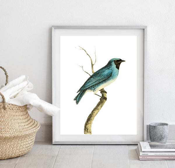 Bird on a branch print/ wall art