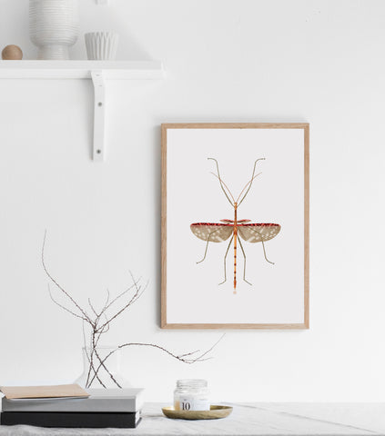 Stick insect print/ wall art