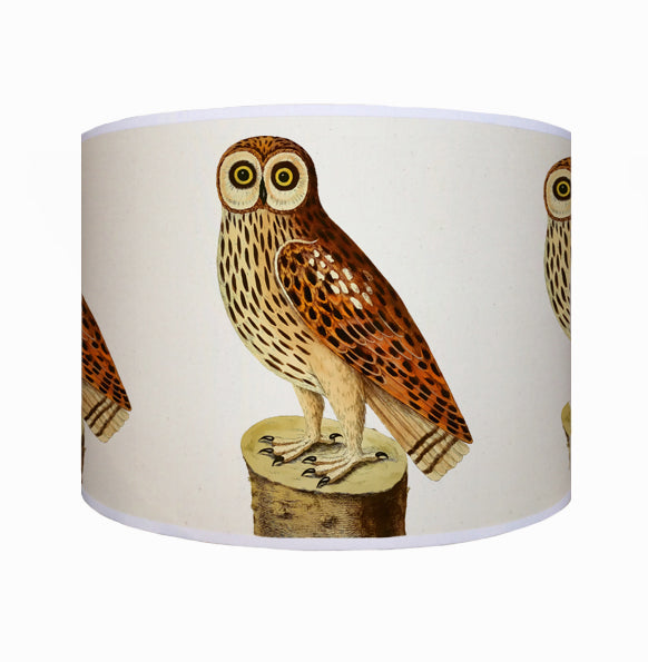 Wide eyed owl shade