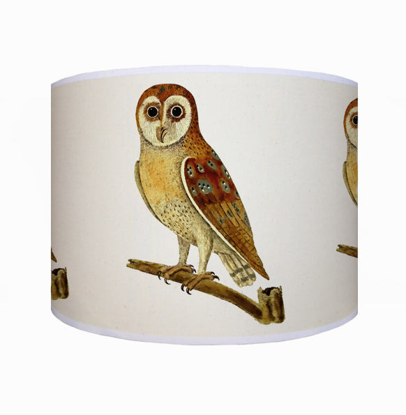 Brown owl shade