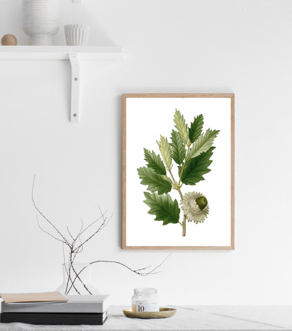 Green acorn print/ wall art