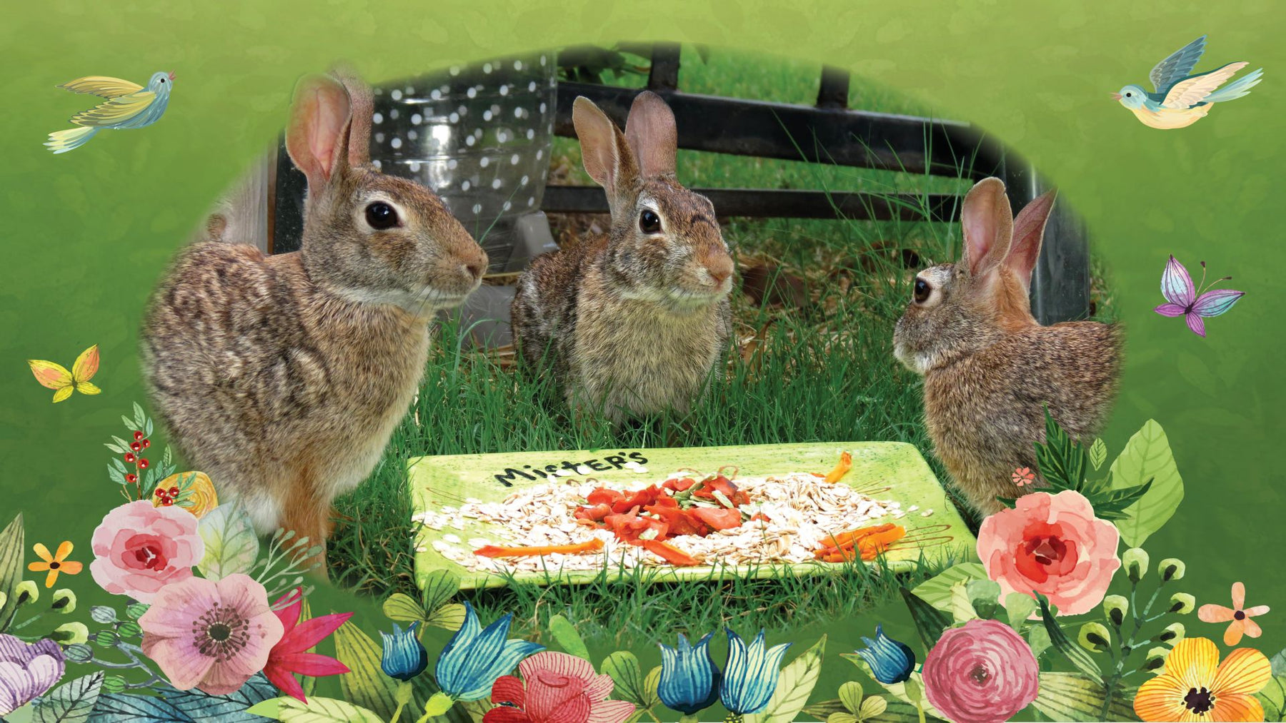 Mister's Garden - Bunny Books - Rabbit and Crazy Cat Gifts - Wild Texas Buns - Live in the Moment - JellyBean Publishing