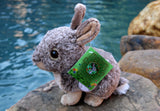 Bunny Rabbit Gift Book & Plush Mini Mister the Bunny - Mister's Garden