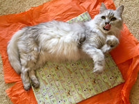 Catnip Mat - Cats and Books