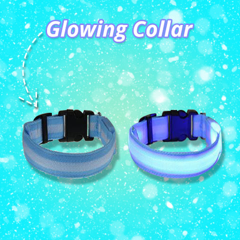 Glowing Collar