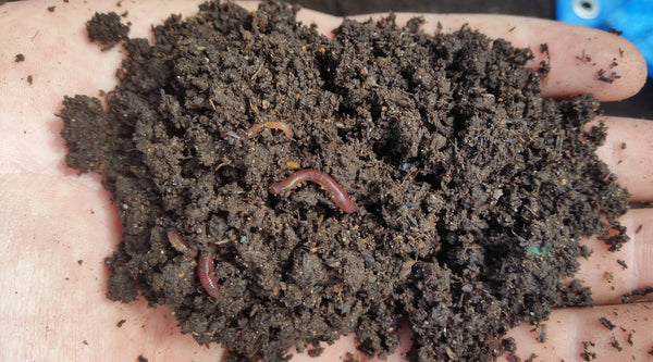 OGS Vermicompost / Worm Castings (25L)