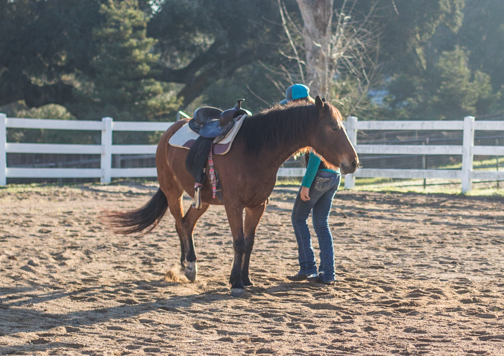 How to Disengage Your Horse's Hindquarters - Andrea Cao