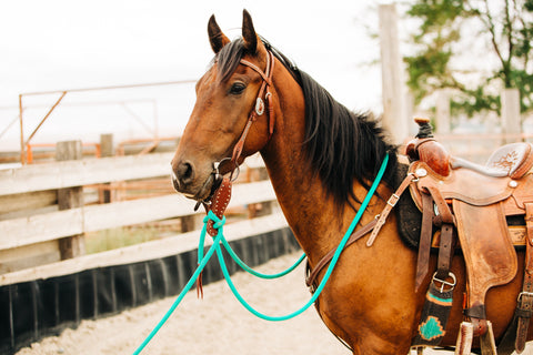 turquoise western tack set mecate bridle