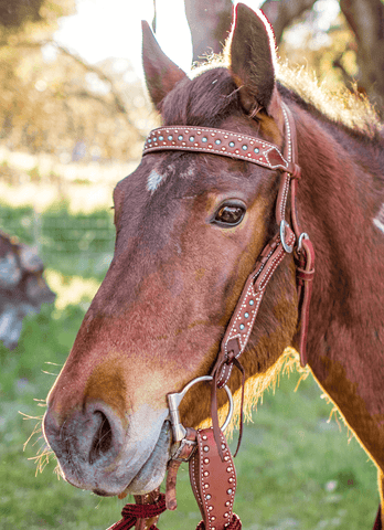 """Templeton"" Copper Turquoise Patina Dotted Roughout Straight Browband - Andrea Equine"