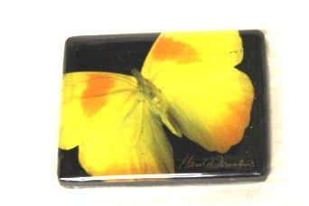 Harold Feinstein Butterfly Magnets- Yellow