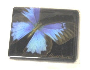 Harold Feinstein Butterfly Magnets- Blue